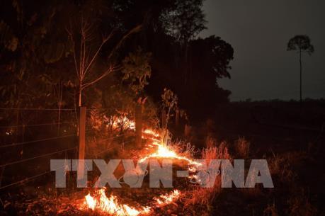 Các nhà lãnh đạo G7 nhất trí chi 20 triệu euro bảo vệ rừng Amazon