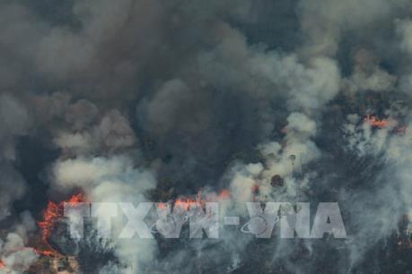 Brazil điều máy bay vận tải quân sự dập các đám cháy rừng Amazon