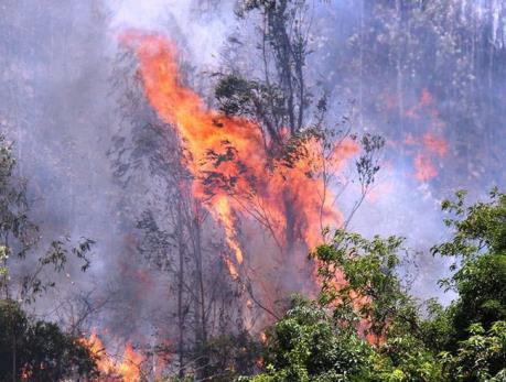 Phú Yên: Cơ bản dập tắt các đám cháy rừng tại xã Hòa Định Tây