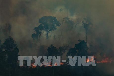 Giới chuyên gia cảnh báo cháy rừng Amazon có thể ảnh hưởng tới nhiệt độ toàn cầu