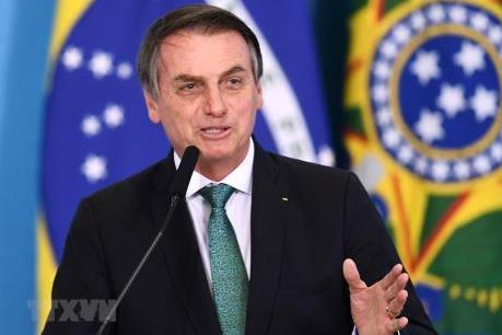 Brazil từ chối khoản hỗ trợ cứu rừng Amazon trị giá 20 triệu USD từ G7