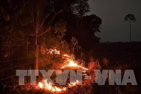 Ngày 6/9, các nước Nam Mỹ nhóm họp cứu rừng Amazon