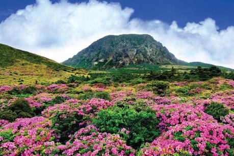 Đừng quên chinh phục núi Hallasan khi đến đảo Jeju
