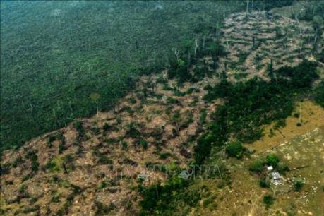 WHO: Cháy rừng Amazon có thể làm gia tăng bệnh về hô hấp với trẻ em