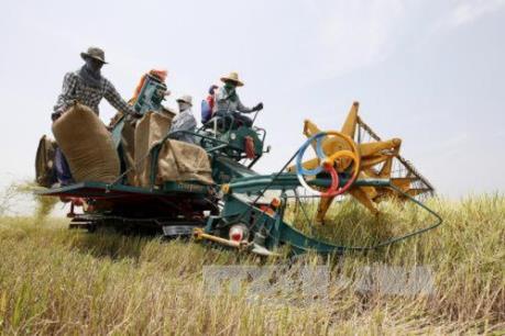Thái Lan: Chính sách đảm bảo giá nông sản không phải là giải pháp lâu dài