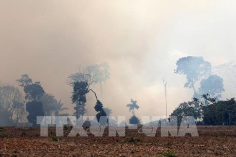 Brazil sẽ công bố thông tin về các đề nghị hỗ trợ dập cháy rừng Amazon
