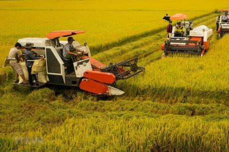 Thủ tướng ra Chỉ thị về phát triển bền vững đồng bằng sông Cửu Long