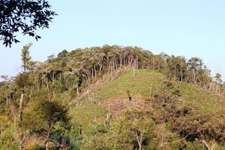 Quản lý đất nông, lâm trường - Bài 1: Giải bài toán tranh chấp, lấn chiếm đất đai