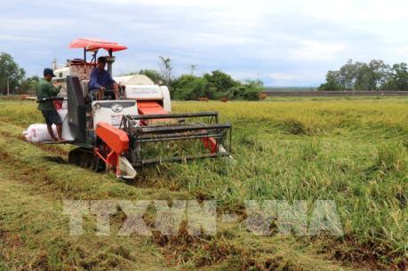 Quảng Trị nỗ lực cứu lúa sau lũ lụt