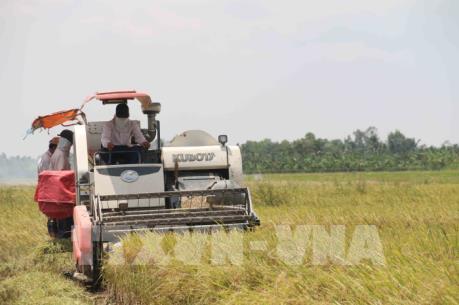 Ứng dụng cơ giới hóa gieo cấy lúa tại Đồng bằng sông Cửu Long