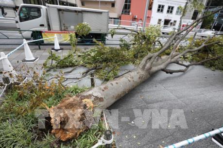 Nhật Bản khắc phục hậu quả nặng nề của siêu bão Faxai