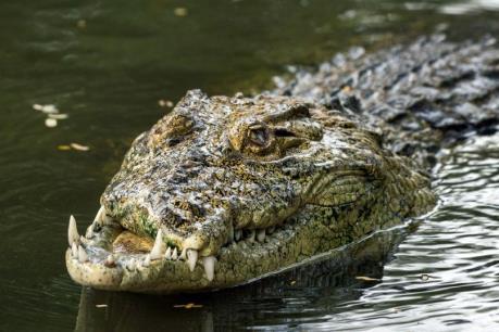Hà Tĩnh: Nghiêm cấm đánh bắt thủy hải sản trên khúc sông nghi có cá sấu 