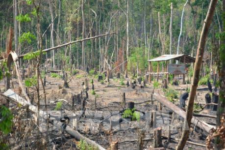 Gia Lai: Đề nghị chuyển hồ sơ sang Công an xử lý vụ mất hơn 1.200 ha rừng