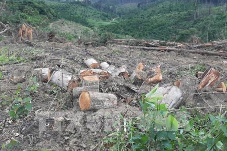 Lâm Đồng điều tra vụ mở đường phá rừng chiếm đất ở Đam Rông