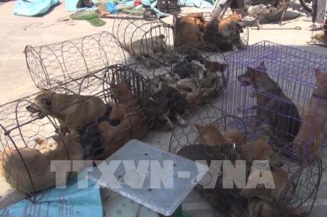 Thanh Hóa bắt giữ nghi phạm trong đường dây trộm hàng trăm tấn chó