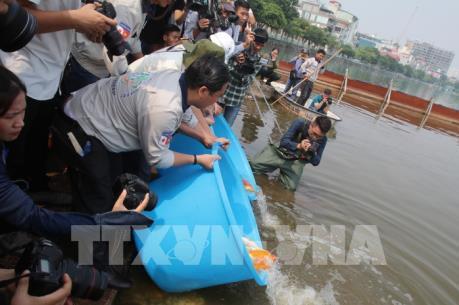 Hà Nội thả cá Koi Nhật Bản xuống sông Tô Lịch và Hồ Tây