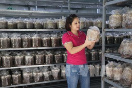 Phát triển kinh tế từ trồng nấm an toàn tại Bắc Kạn