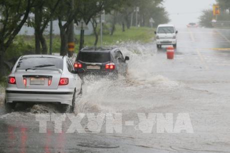 Gần 250 chuyến bay ở Hàn Quốc bị hủy do bão Tapah