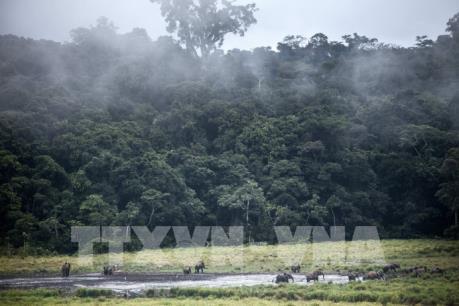 Gabon sẽ trở thành quốc gia đầu tiên được trả tiền để bảo vệ rừng