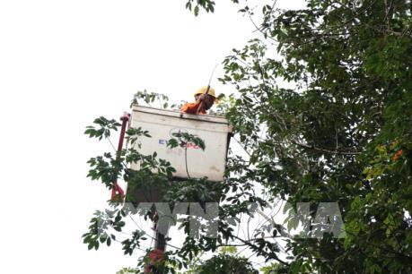 Điện lực Gia Lai đảm bảo an toàn hành lang lưới điện
