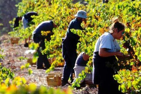 Australia mở rộng hạn ngạch thị thực lao động kết hợp kỳ nghỉ