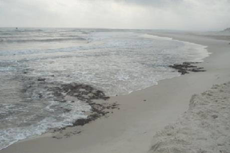 Brazil điều tra nguyên nhân dầu loang trên 39 bãi biển