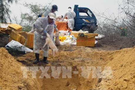 Phú Yên tiêu hủy hàng trăm kg thịt lợn không rõ nguồn gốc