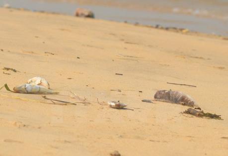 Không còn tình trạng cá chết trôi vào bờ biển Hà Tĩnh