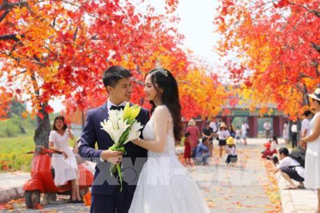 Giới trẻ Hà Nội háo hức với con đường phong lá đỏ như ở Hàn Quốc