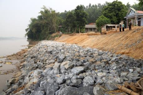 Được kè khẩn cấp, bờ sông Thao vẫn tiếp tục sạt lở