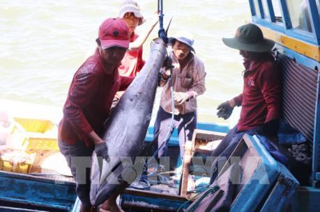 Xuất khẩu cá ngừ đại dương tăng trưởng ngoạn mục