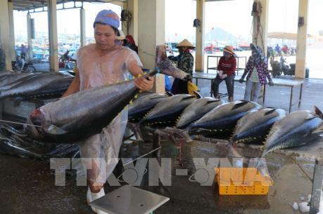 Hiệp định EVFTA: Cơ hội phục hồi xuất khẩu sản phẩm tôm, cá ngừ
