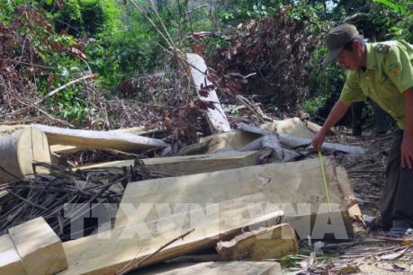 Phát hiện vụ phá rừng ở Hòn Đác