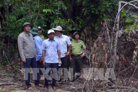 Phó Bí thư Thường trực Tỉnh ủy Phú Yên chỉ đạo sớm điều tra vụ rừng Hòn Đác bị phá