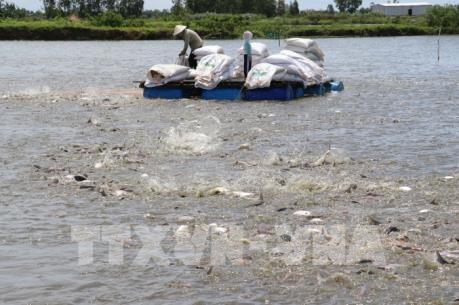 Cá tra Việt đi trước, đón đầu