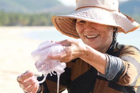 Bắt sứa ở biển Vịnh Hoà
