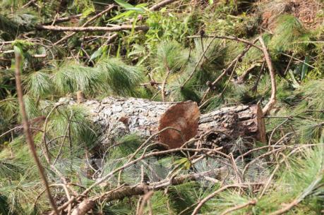 Xác định chủ mưu vụ phá rừng quy mô lớn ở Đà Lạt