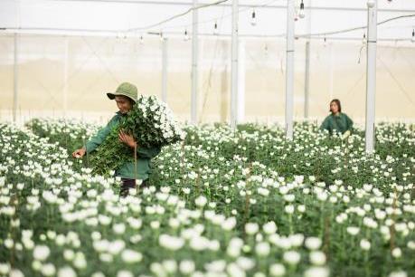 Điểm yếu của xuất khẩu hoa Việt Nam
