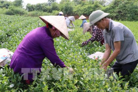 10 năm xây dựng nông thôn mới: Phát triển nông nghiệp gắn chuyển đổi mô hình tăng trưởng