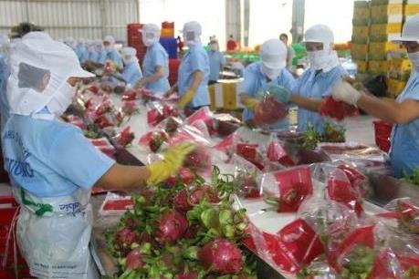 Xuất khẩu chính ngạch: Bước đi bền vững và hiệu quả
