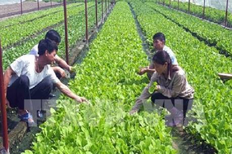 Phát triển nông nghiệp 4.0: Lựa chọn công nghệ cho phù hợp