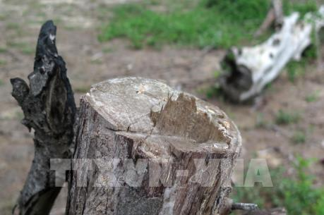 Phản hồi thông tin TTXVN về diện tích đất rừng bị lấn chiếm tại Quảng Ngãi