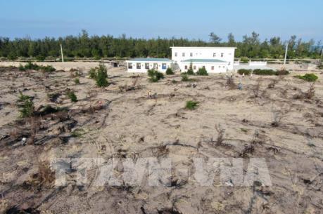 Trồng lại rừng bị phá trong khu vực Dự án phong điện tại KKT Nhơn Hội, Bình Định
