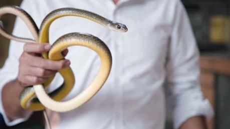 Đặc sản thịt rắn Lệ Mật nổi tiếng Hà Nội lên kênh CNN