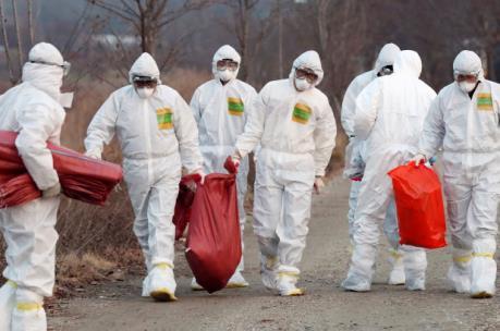 Hàn Quốc phát hiện ca nghi nhiễm virus cúm gia cầm có thể gây tử vong