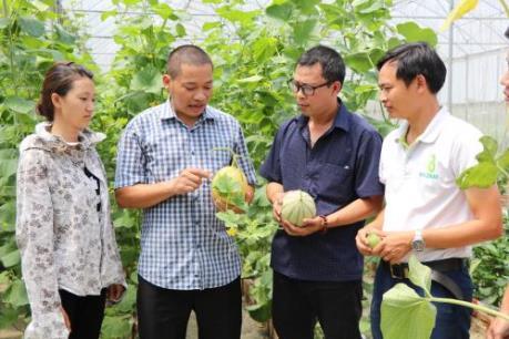 Bắc Ninh phát triển nông nghiệp công nghệ cao theo hướng bền vững