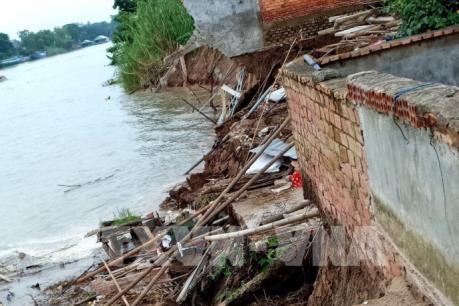 Gia cố khẩn cấp các đoạn sạt lở đất bờ kênh ở An Giang