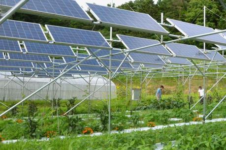 Triển khai dự án điện mặt trời kết hợp nông nghiệp tại Sóc Trăng