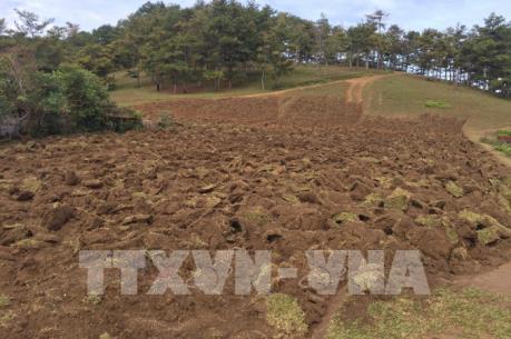 Lâm Đồng điều tra vụ 2.000m2 đất rừng trong Vườn Quốc gia Bidoup bị cày xới