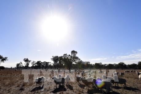Nhiều sinh vật có nguy cơ tuyệt chủng do ấm lên toàn cầu